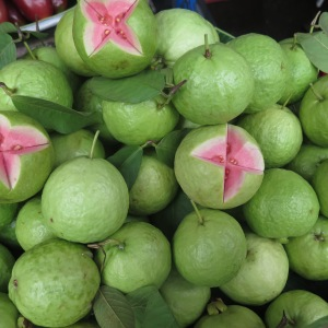 Pink Guava-Bailey's favorite